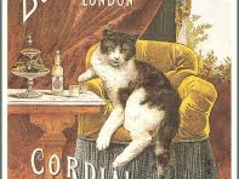 CORDIAL OLD TOM GIN